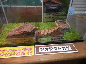 aojitatokage