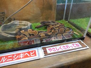nishikihebi1